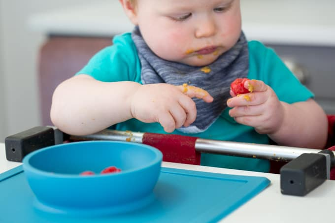 close up of baby intently looking at and holding finger foods such as raspberries while sitting in a high chair